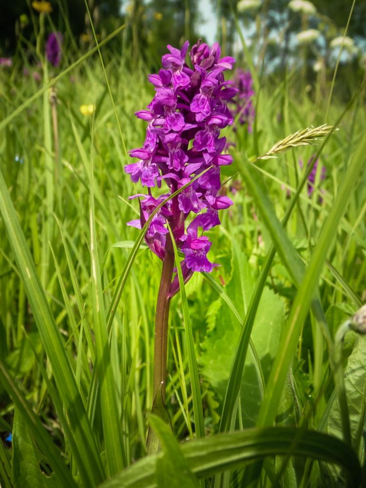 Orchideen (1 von 1)-2