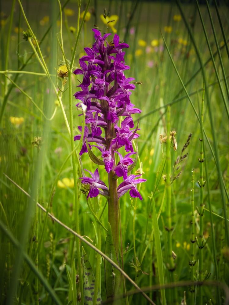 Orchideen (1 von 1)