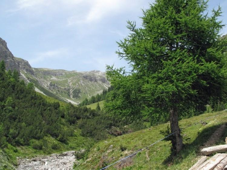 Bärenpark Arosa