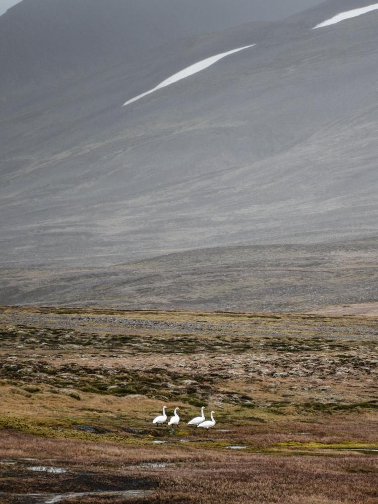 Iceland15 (1 von 1)-8