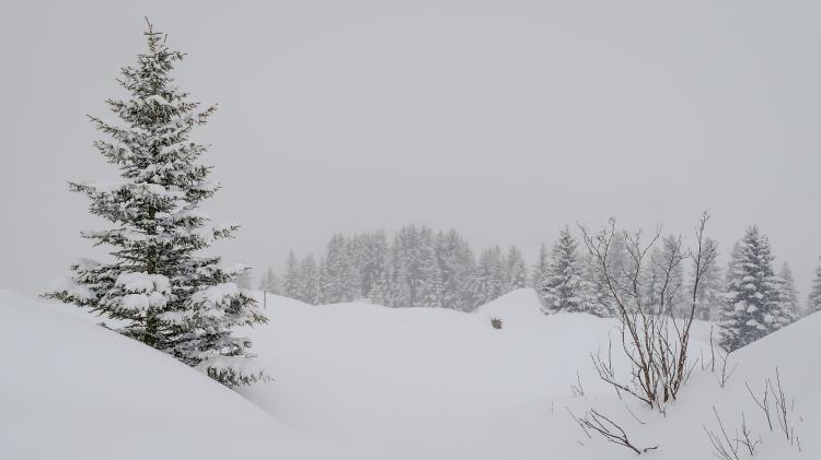 nach dem grossen Schneefall Arosa-1090975