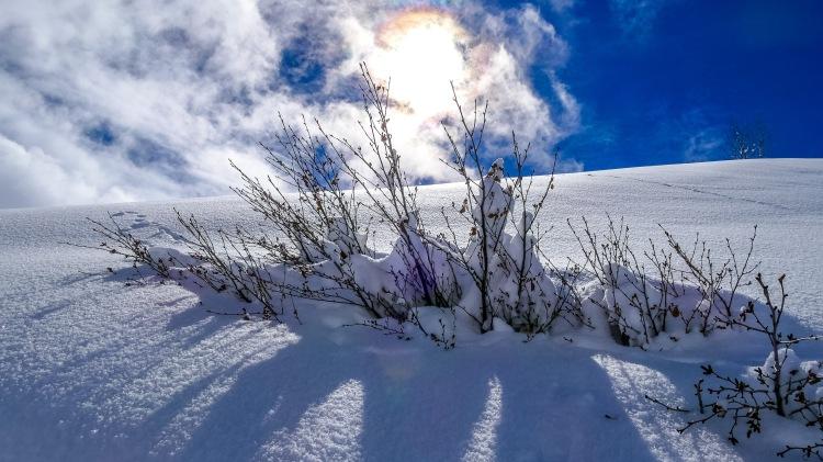 nach dem grossen Schneefall Arosa-1100087