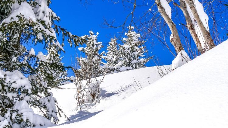 nach dem grossen Schneefall Arosa-1100214