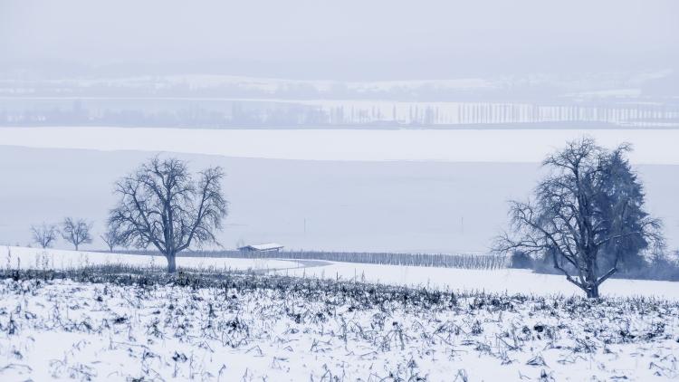 eisige Winterlandschaft (Bild Untersee Januar 2017)