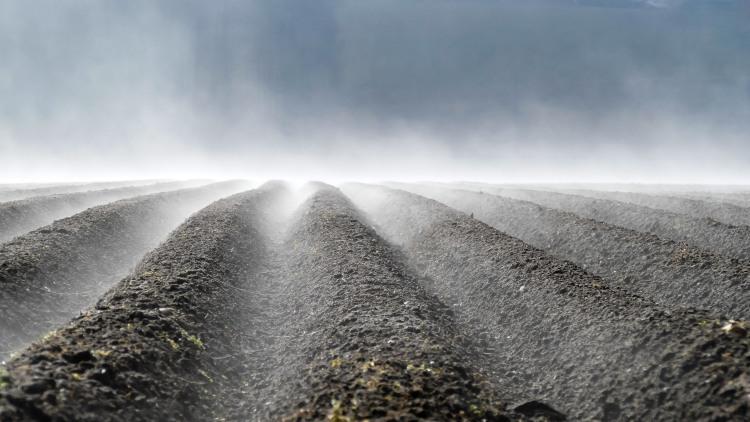 Acker im Morgen Nebel