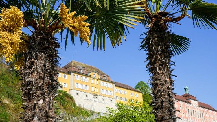 Meersburg Bodensee Palmen