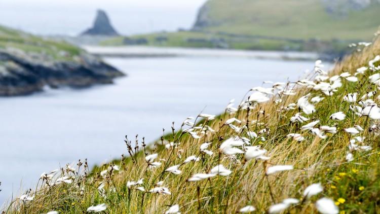Fetland Shetland